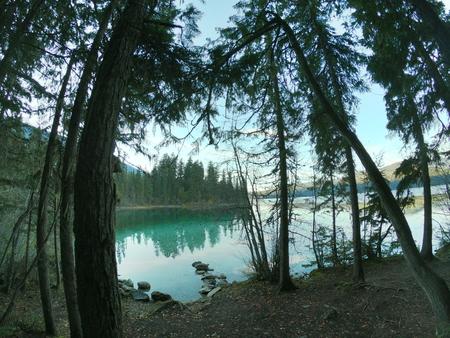 Lake through the trees