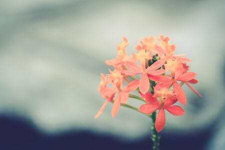 tone: vintage tone flower background