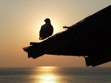 A bird at sunset Stock Photo - 7400294