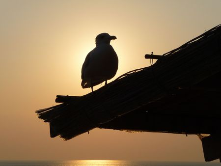 A bird at sunset photo