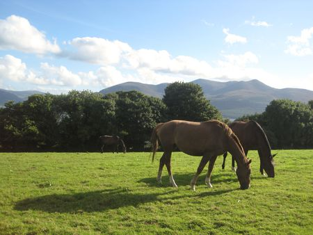 Two horses on the grass overlooking the lakes in Aghadoe Heights, Killarney, Ireland