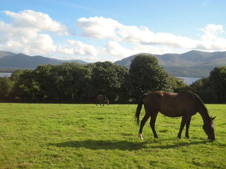 A horse on the grass overlooking the lakes in Aghadoe Heights, Killarney, Ireland