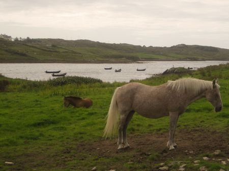 Two horses on the grass near the ocean fiord, in Sky Road, Clifden, Ireland Stock Photo