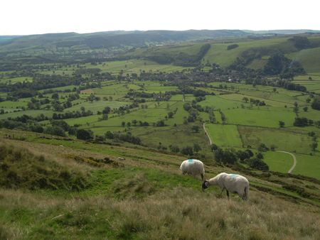 Two English sheep grazing with a view of the valley, Peak District National Park, Manchester, England Stock Photo