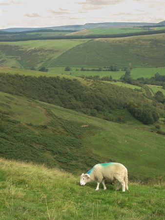 An English sheep grazing in the valley, Peak District National Park, Manchester, England Stock Photo