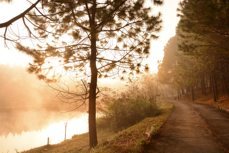 chan: The walkway along foggy pond and pine forest at Ban Wat Chan Pine Forest in northern Thailand Stock Photo