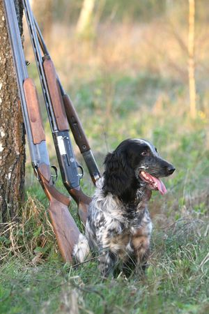 Dog with guns under a tree Stock Photo