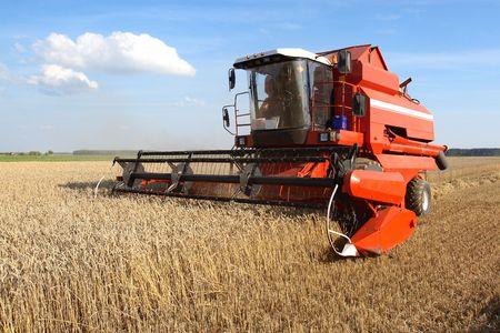Machine de récolte le champ de blé