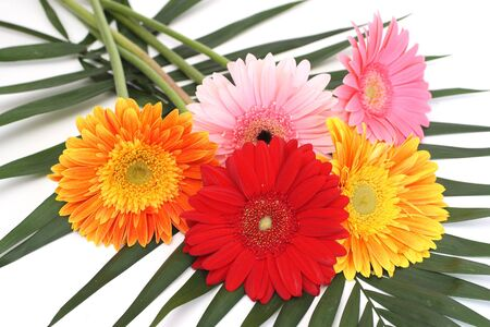 Bouquet from five gerbera daisies photo