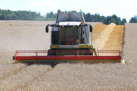 Machine harvesting the corn field photo