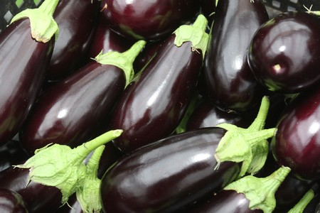 Group of purple eggplants with green leaves Stock Photo