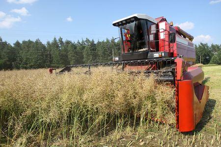 Machine harvesting Rape photo