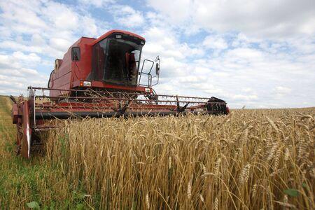 Machine harvesting the corn field photo