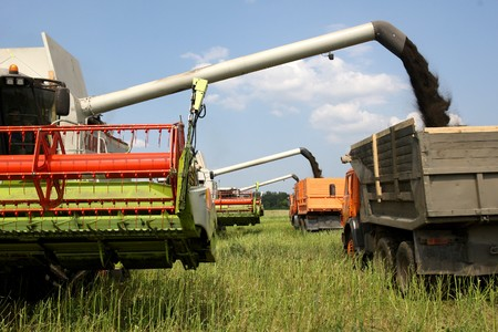 Machine harvesting Rape (Brassica napus) Stock Photo - 7375672