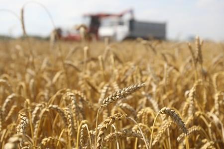 Summer landscape - combine working on a wheat field photo