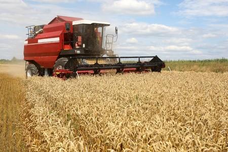Summer landscape - combine working on a wheat field Stock Photo - 7420647