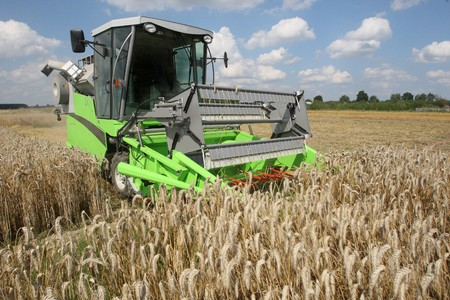 corn stalk: Machine harvesting the corn field
