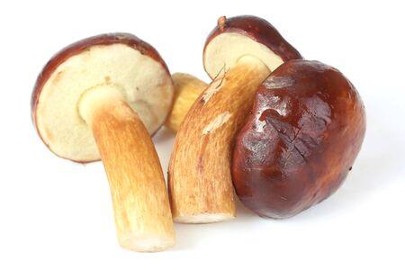 mushroom (Xerocomus badius, Boletus badius) isolated on white background photo