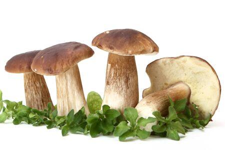 fresh white mushrooms (Boletus edulis) Stock Photo - 7877741