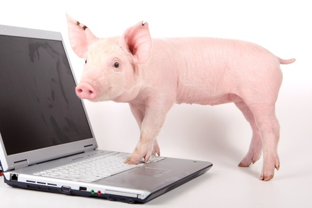 Small pig and a laptop on white Standard-Bild - 12837725
