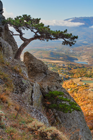 Mountain pine on the cliff and autumn valley as background, Demirji, Crimea, hdr style shot photo