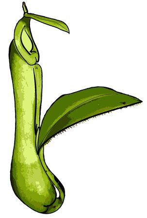 Nepenthes, also known as tropical pitcher plants, is a genus of carnivorous plants in the monotypic family Nepenthaceae.