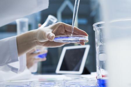 Vrouwen hebben de onderzoekers de vloeistof in een petrischaal met druppelaar Stockfoto