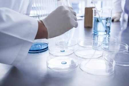 Scientist with Petri dish in laboratory. Stock Photo - 60458516
