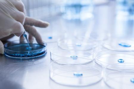 Close-up of a Petri dish.