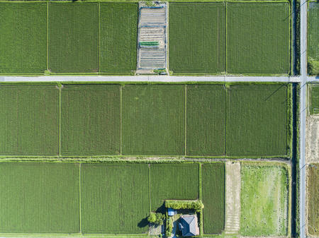 Scenery of paddy fields in Japan. Aerial shooting from directly above.