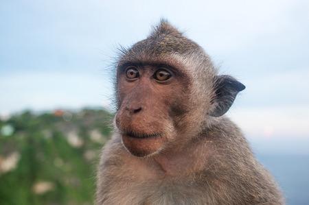 Monkey omnivorous mammal herbivore