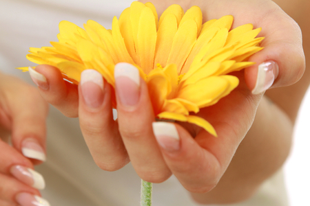 yellow gerbera isolated on: Yellow gerbera in well-cared-for female hand isolated