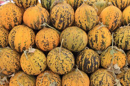 melon field: Melon sweet summer harvest juicy on the table