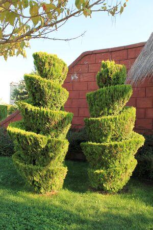 topiary: Topiary clipped trees in a public park Ankara Turkey