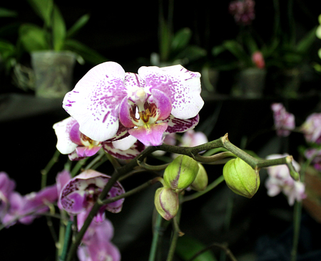 cumbria: Orchids flowers of rare varieties exotic epiphytes