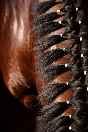 mane: mane of a chestnut horse, braided hairstyle