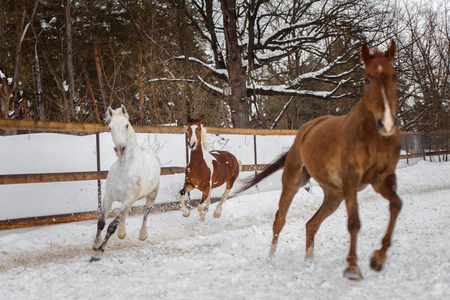 Domestic horses of different colors walking in the snow paddock in winter. The concept of keeping Pets. Stockfoto - 117851376