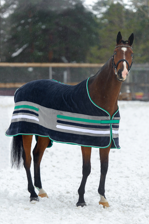 Domestic bay horse walking in the snow paddock in winter. The horse in the blanket. The concept of keeping Pets.