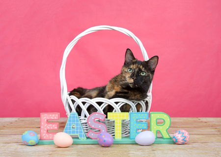 tortoiseshell tortie tabby cat laying in a white basket with EASTER spelled out in colorful blocks on wood table, easter eggs laying around. Bright pink background