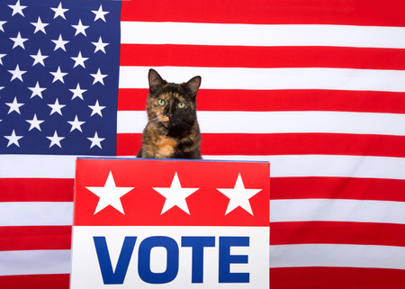 One tortoiseshell cat sitting behind a podium with VOTE sign on the front looking directly at viewer. Voting election theme. Copy space Фото со стока