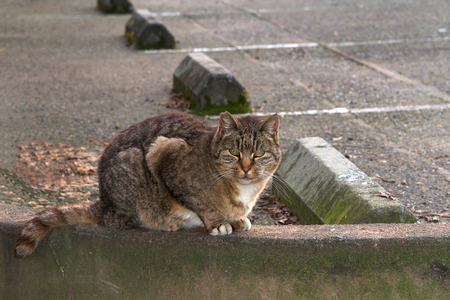 Abandoned stray feral cat in a parking lot. Trap-neuter-return programs help keep the feral cat population down. Domestic and feral cats kill more than a billion birds in America