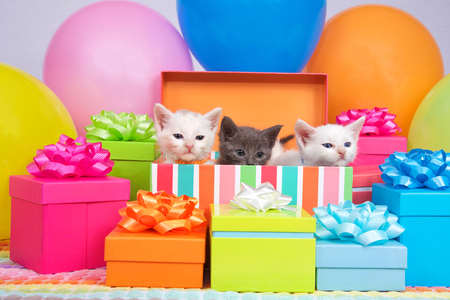Two small white kittens and one gray kitten peaking out of a birthday present box, surrounded by bright colorful party balloons and presents with bows.