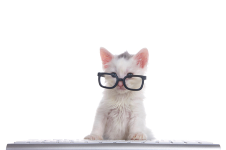One cute adorable fluffy white kitten wearing black geeky glasses looking over the glasses slightly to viewers left, sitting in front of a computer keyboard isolated on white background. Reklamní fotografie - 116447064
