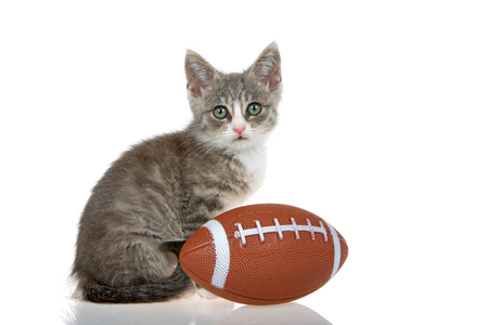 One small gray and white tabby kitten isolated on white background with small football. Reflection.