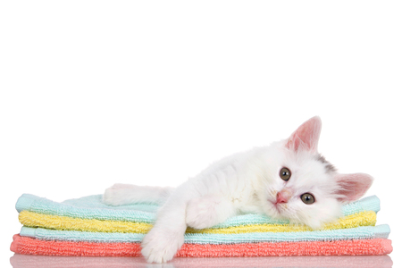 Fluffy white kitten laying on colorful orange, teal and yellow blankets stacked, paw over the side looking slightly to viewers left. Isolated on white background. Stock fotó