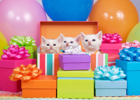 Three small white kittens peaking out of a birthday present box, surrounded by bright colorful party balloons and presents with bows.