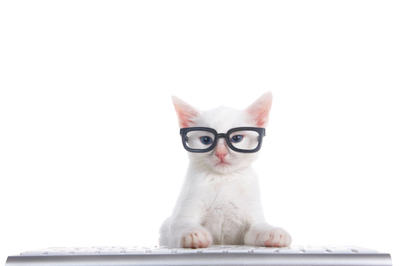 One fluffy white kitten with beautiful blue eyes laying on a computer keyboard isolated on white background. Wearing black geeky glasses looking directly at viewer. Imagens