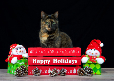 Portrait of a tortoiseshell cat in a red box Happy Holidays greeting written on it black background looking to viewers left. Snowmen holiday presents on each side.