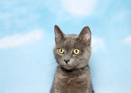 Portrait of a surprised gray kitten looking to viewers left. Blue background sky with clouds. Stock fotó