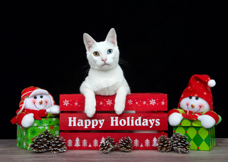 Portrait of a white kitten with heterochromia in a red box Happy Holidays greeting written on it black background looking to viewers left. Snowmen holiday presents on each side.